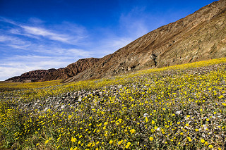 Rare Super Bloom – Once In A Life Time Experience In Death Valley