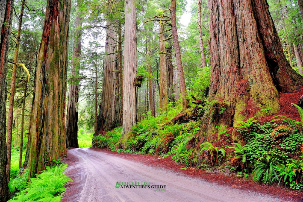 redwoods motorcycle rides