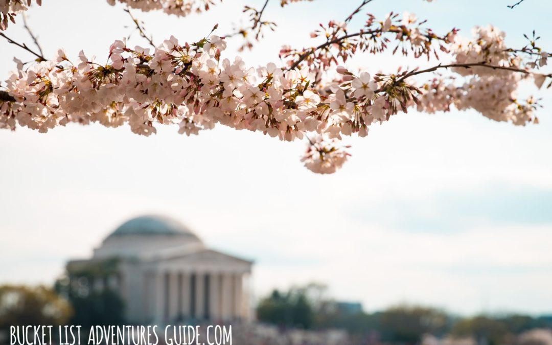 Must See Places In Washington DC